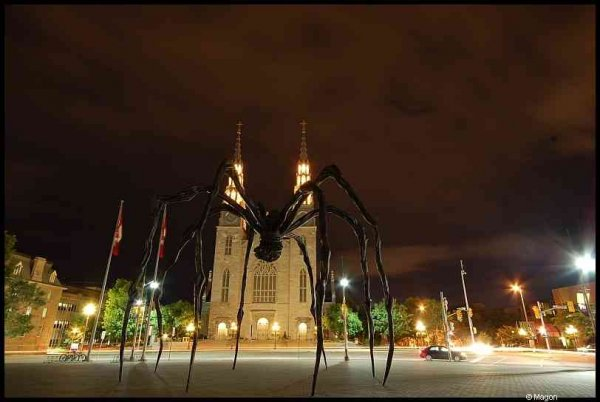 Maman in Ottawa by Magon