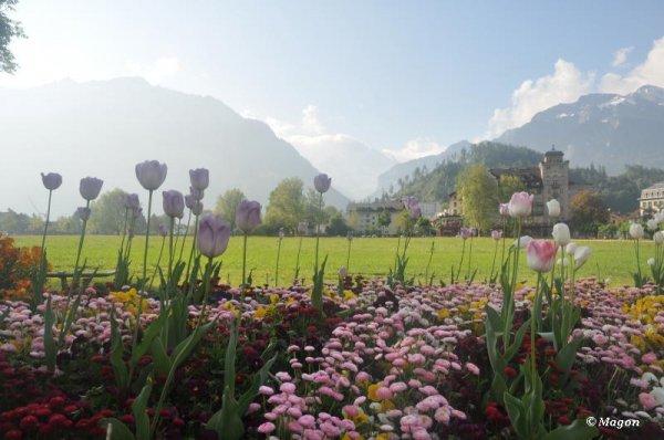 Красоты Интерлакена (Швейцария) by Magon